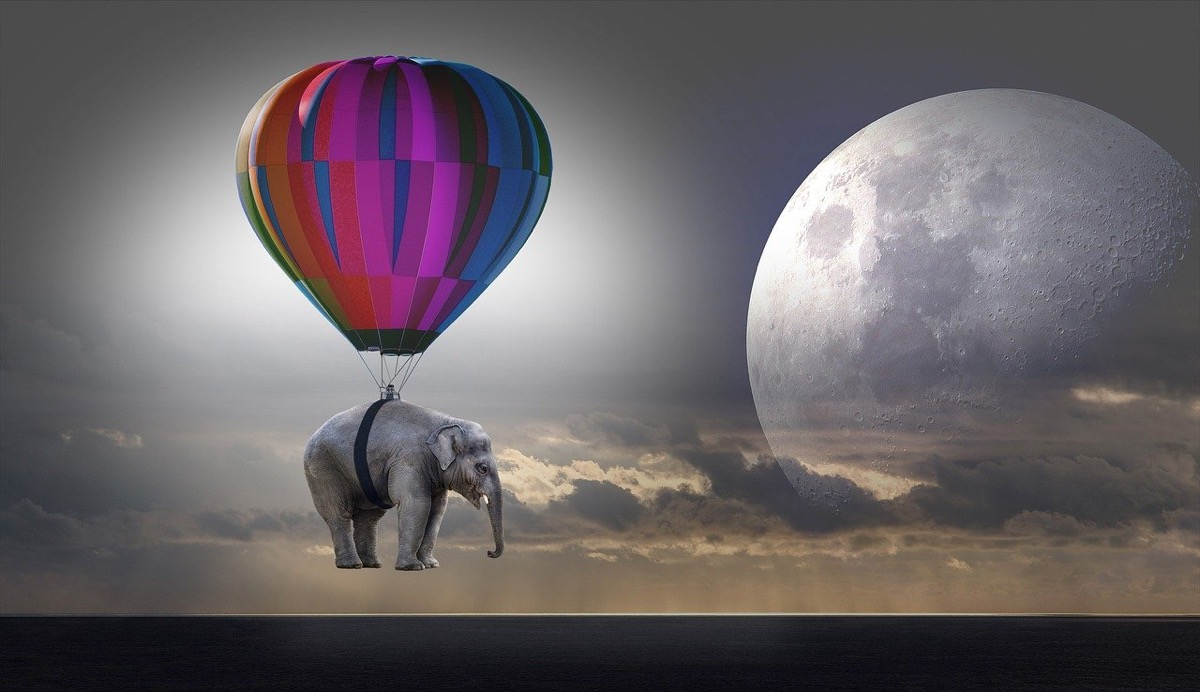elephant-2611677_1280