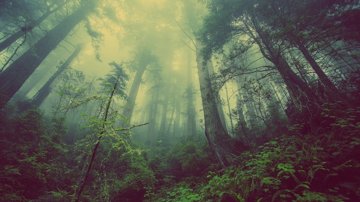 forest-931706_1280